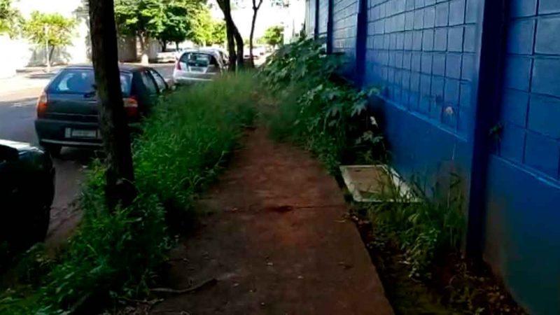 Alguns pontos de uma das ruas importantes da cidade de Ribeirão Preto, a Alice Além Saadi, não têm merecido atenção das autoridades locais.