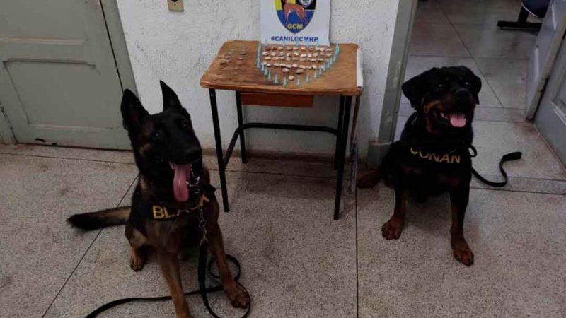 Com o apoio do cão K9 Black, foi localizado 29 capsulas de cocaína, 43 trouxas de maconha e R$ 7 em moedas