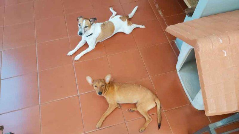 Dois cãezinhos protagonizaram cenas fofas de paquera e diversão