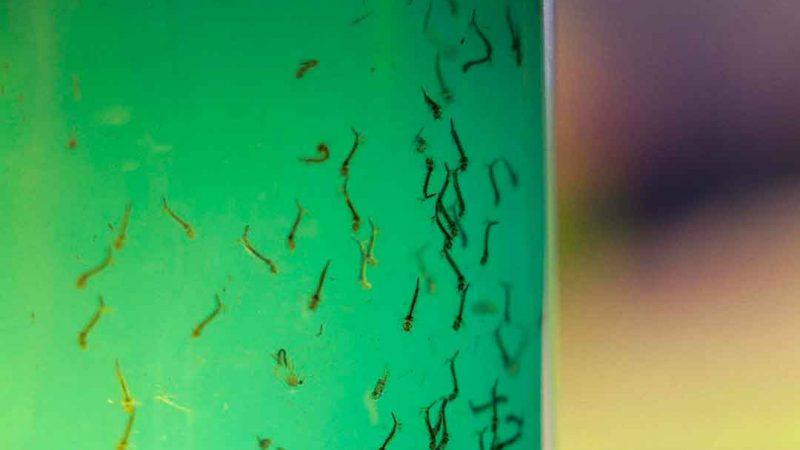 O departamento de Vigilância em Saúde, órgão da Secretaria Municipal da Saúde, divulgou o Boletim Epidemiológico da dengue, com apenas três casos confirmados na cidade no mês de janeiro de 2021
