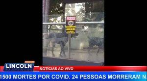 DENUNCIA DE MAUS TRATOS A ANIMAIS