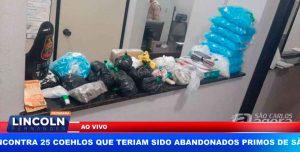 FORÇA TÁTICA ACABA COM 'REFINARIA' DE DROGAS EM CASA NO BAIRRO JACOBUCCI